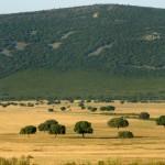 El Parque Nacional de Cabañeros en Castilla La Mancha