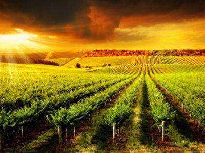 Turismo Enológico por Castilla la Mancha