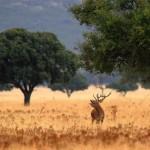 Este verano en Castilla La Mancha (III)